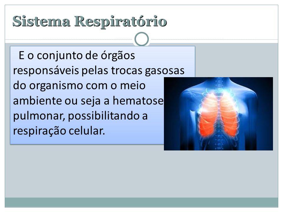 Sistema Respiratório do organismo com o meio