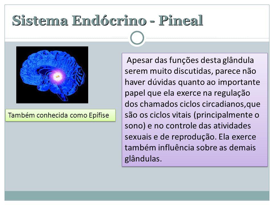 Sistema Endócrino - Pineal