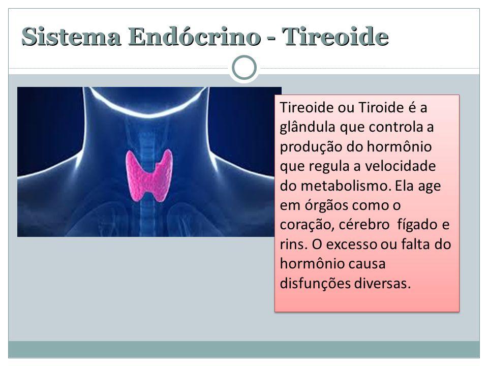 Sistema Endócrino - Tireoide