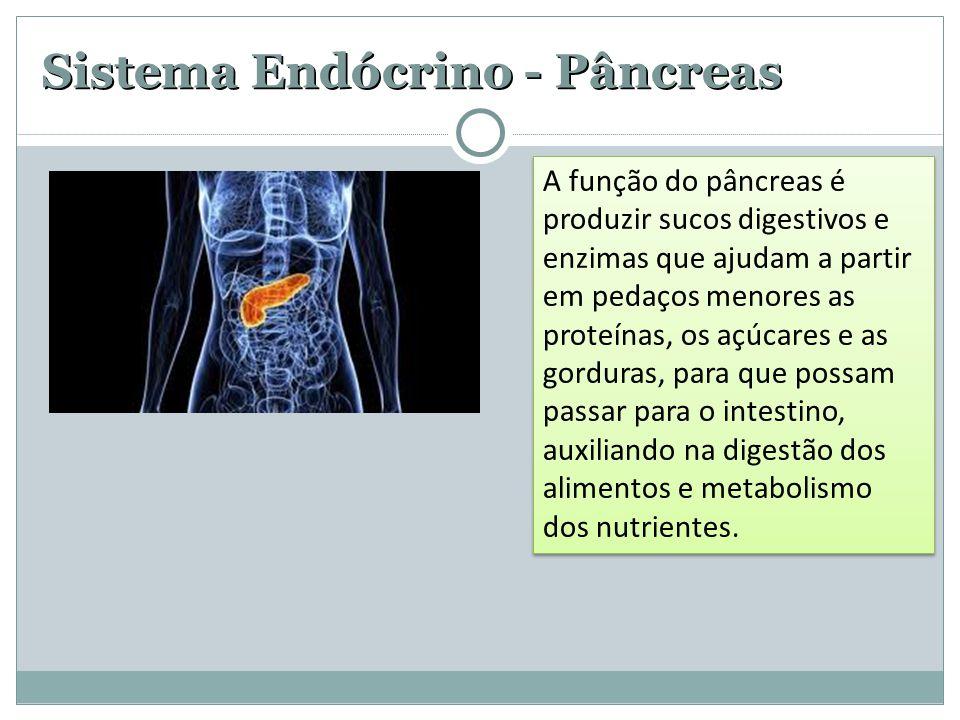 Sistema Endócrino - Pâncreas