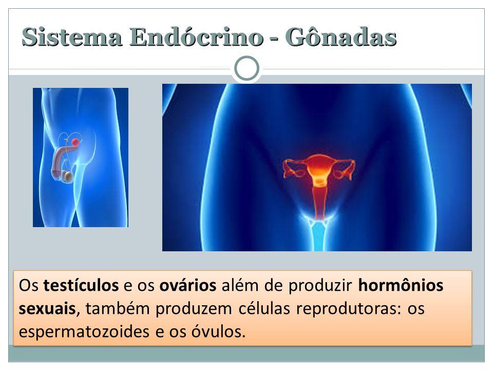 Sistema Endócrino - Gônadas