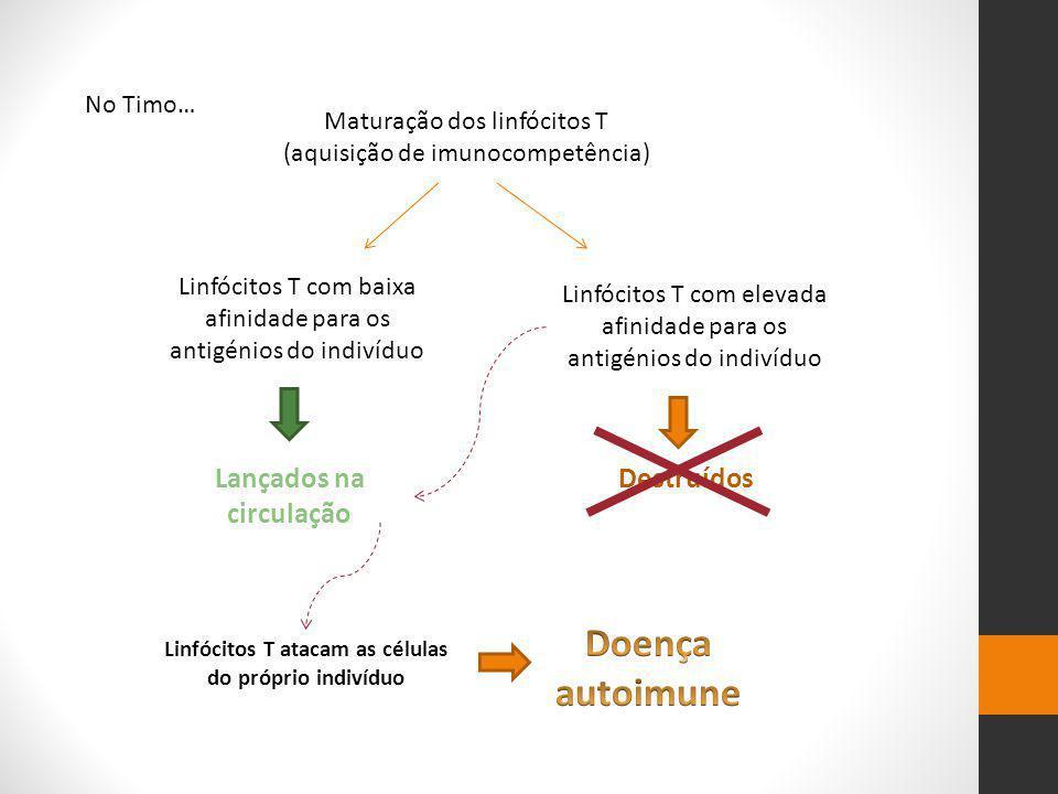 Doença autoimune Lançados na circulação Destruídos No Timo…
