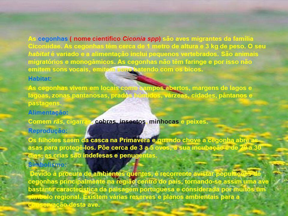 As cegonhas ( nome cientifico Ciconia spp) são aves migrantes da família Ciconiidae. As cegonhas têm cerca de 1 metro de altura e 3 kg de peso. O seu habitat é variado e a alimentação inclui pequenos vertebrados. São animais migratórios e monogâmicos. As cegonhas não têm faringe e por isso não emitem sons vocais, emitem sons batendo com os bicos.