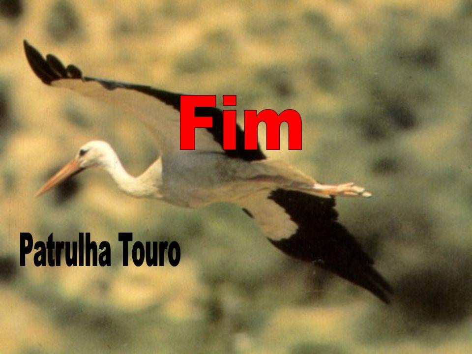 Fim Patrulha Touro