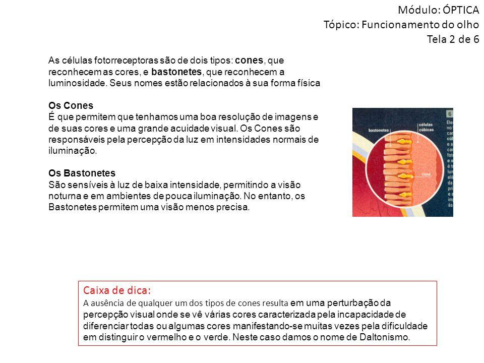 Módulo: ÓPTICA Tópico: Funcionamento do olho Tela 2 de 6