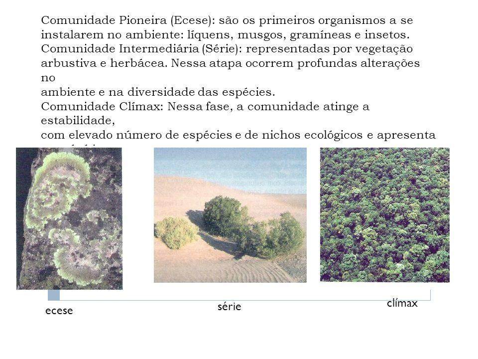 Comunidade Pioneira (Ecese): são os primeiros organismos a se instalarem no ambiente: líquens, musgos, gramíneas e insetos. Comunidade Intermediária (Série): representadas por vegetação arbustiva e herbácea. Nessa atapa ocorrem profundas alterações no ambiente e na diversidade das espécies. Comunidade Clímax: Nessa fase, a comunidade atinge a estabilidade, com elevado número de espécies e de nichos ecológicos e apresenta grande biomassa.