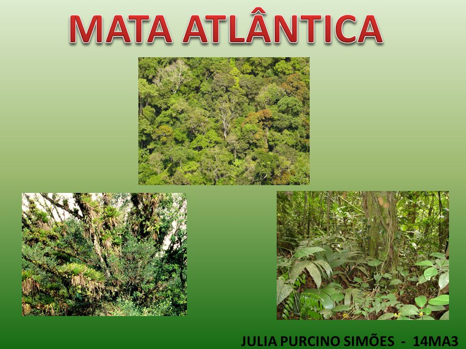 MATA ATLÂNTICA JULIA PURCINO SIMÕES - 14MA3