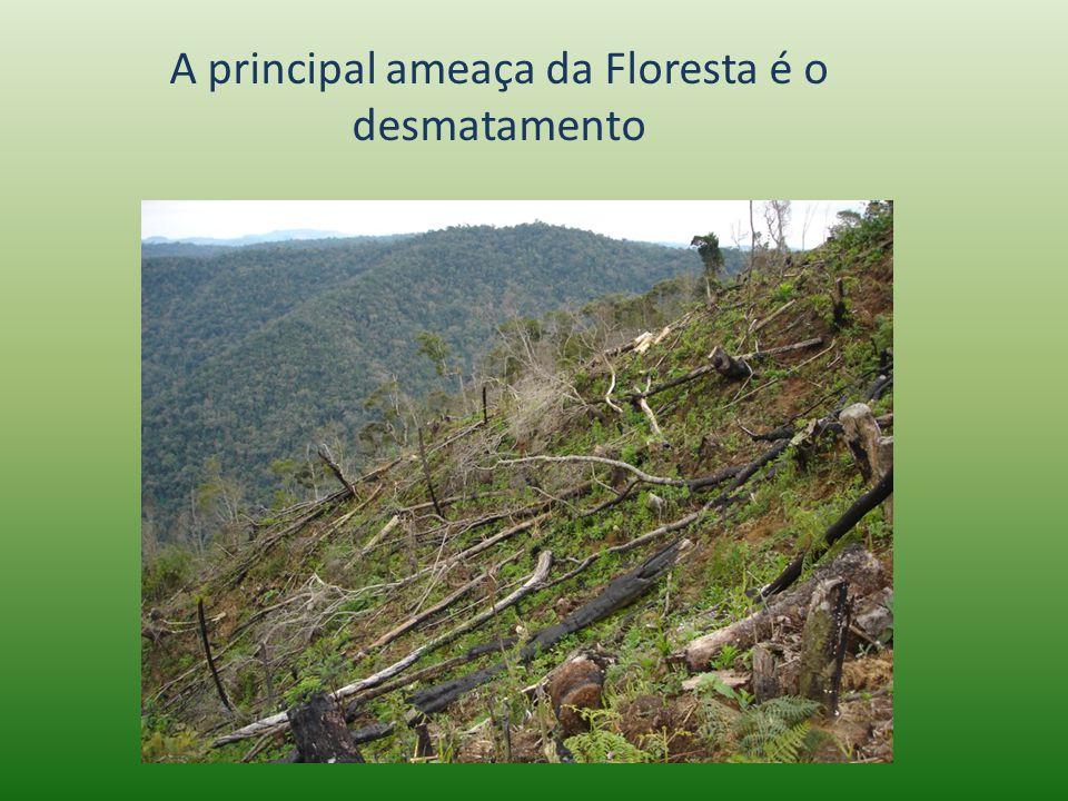 A principal ameaça da Floresta é o desmatamento
