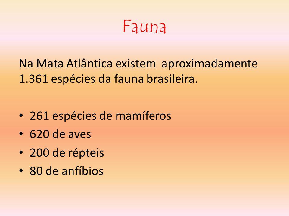 Fauna Na Mata Atlântica existem aproximadamente 1.361 espécies da fauna brasileira. 261 espécies de mamíferos.