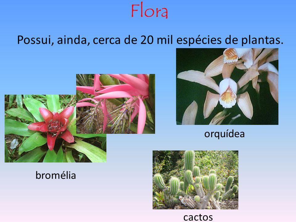 Flora Possui, ainda, cerca de 20 mil espécies de plantas. orquídea