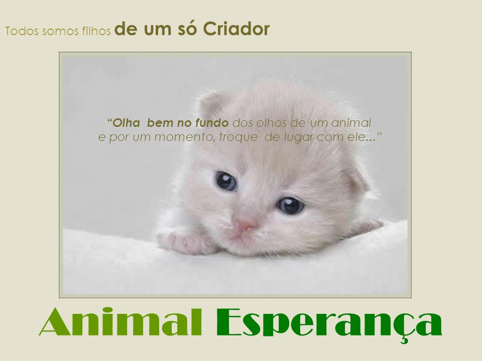 Animal Esperança Todos somos filhos de um só Criador