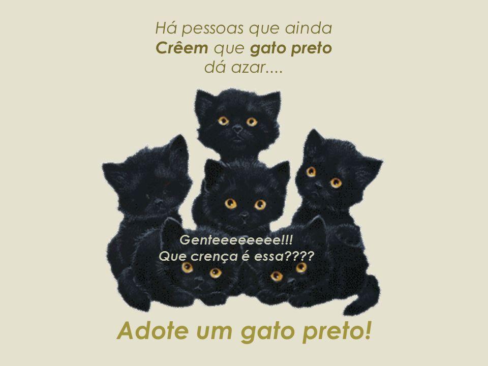Há pessoas que ainda Crêem que gato preto dá azar....