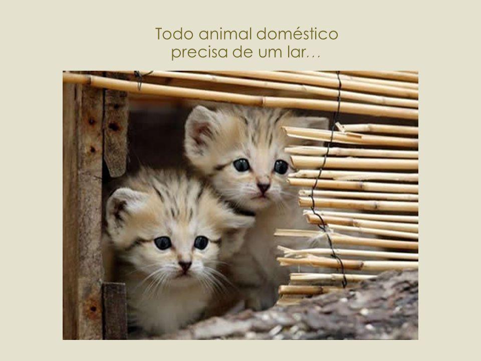 Todo animal doméstico precisa de um lar...