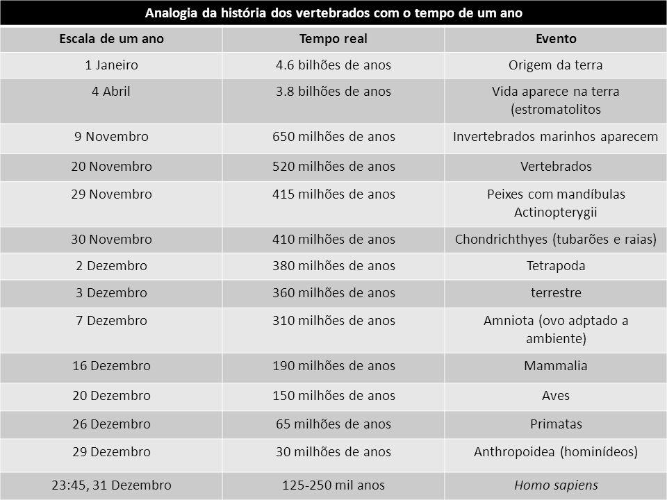 Analogia da história dos vertebrados com o tempo de um ano