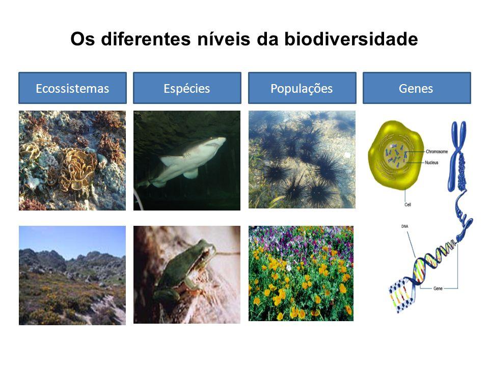 Os diferentes níveis da biodiversidade