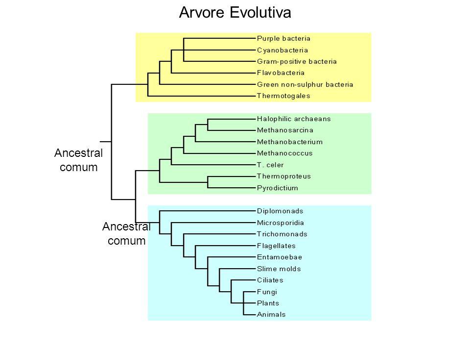 Arvore Evolutiva Ancestral comum