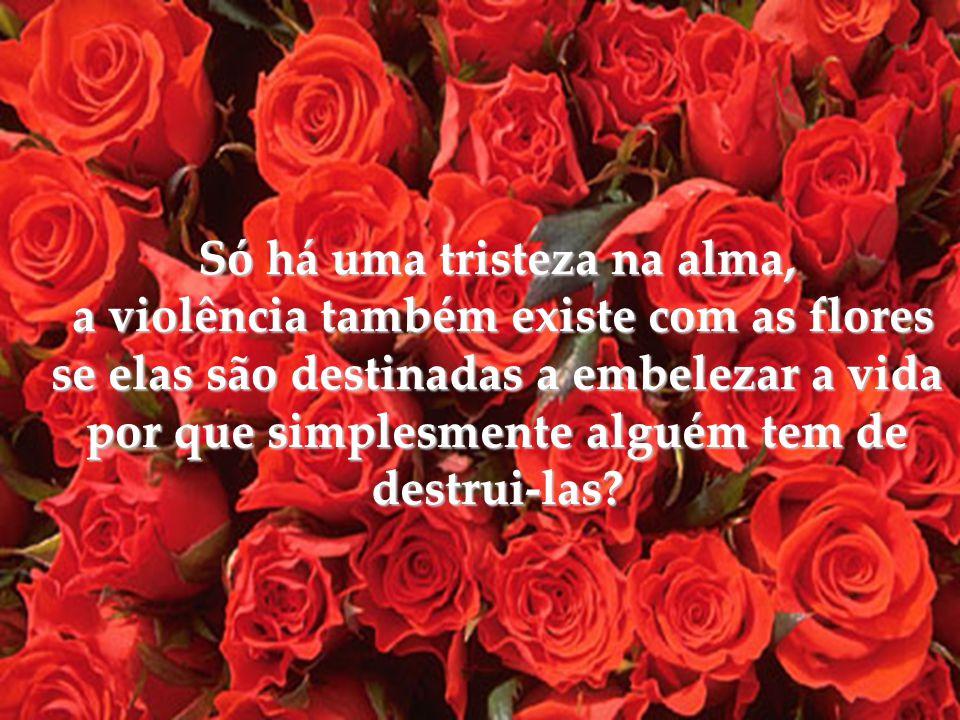 Só há uma tristeza na alma, a violência também existe com as flores