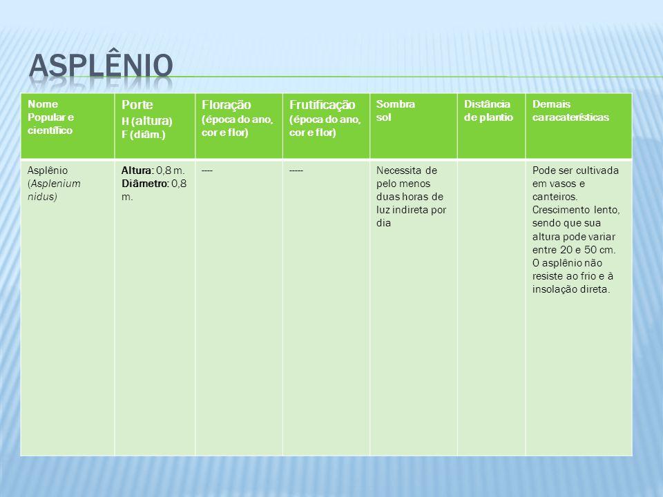 asplênio Porte Floração Frutificação Nome Popular e científico