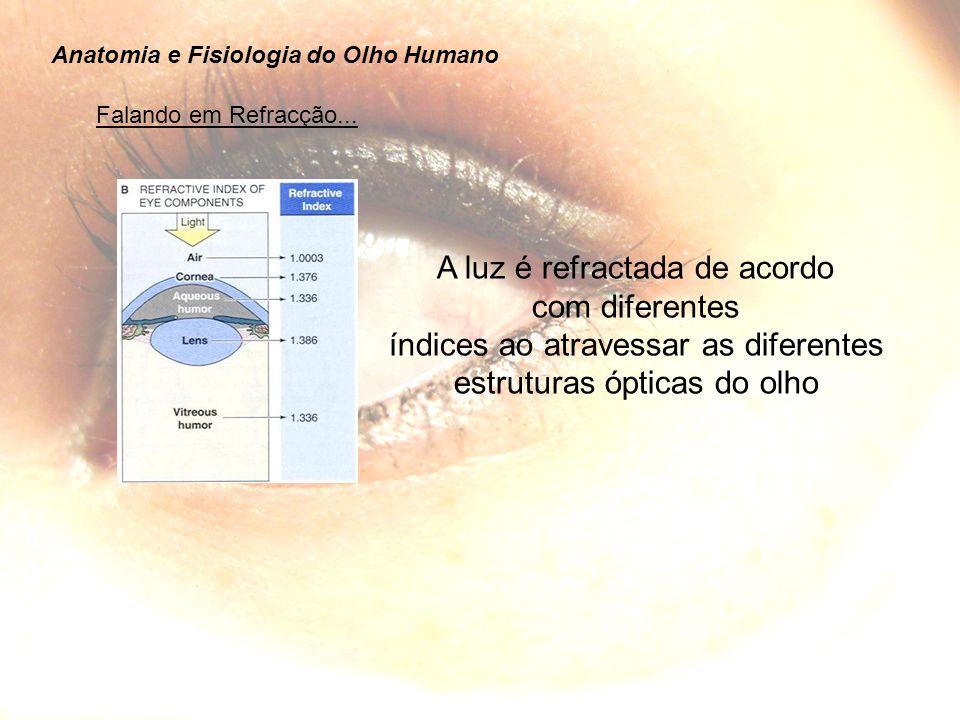 A luz é refractada de acordo com diferentes