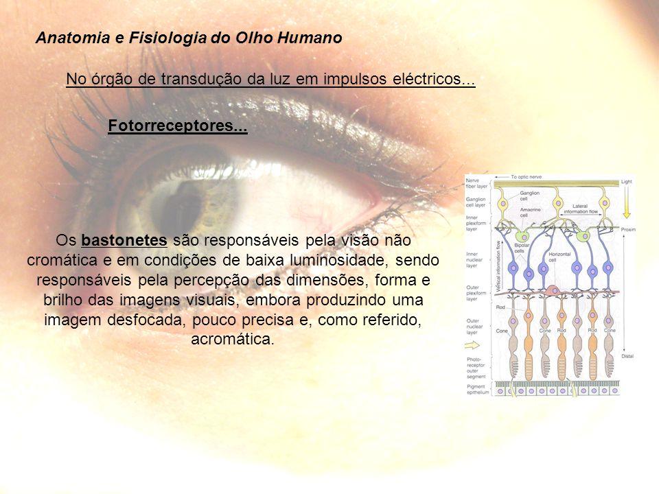 Anatomia e Fisiologia do Olho Humano