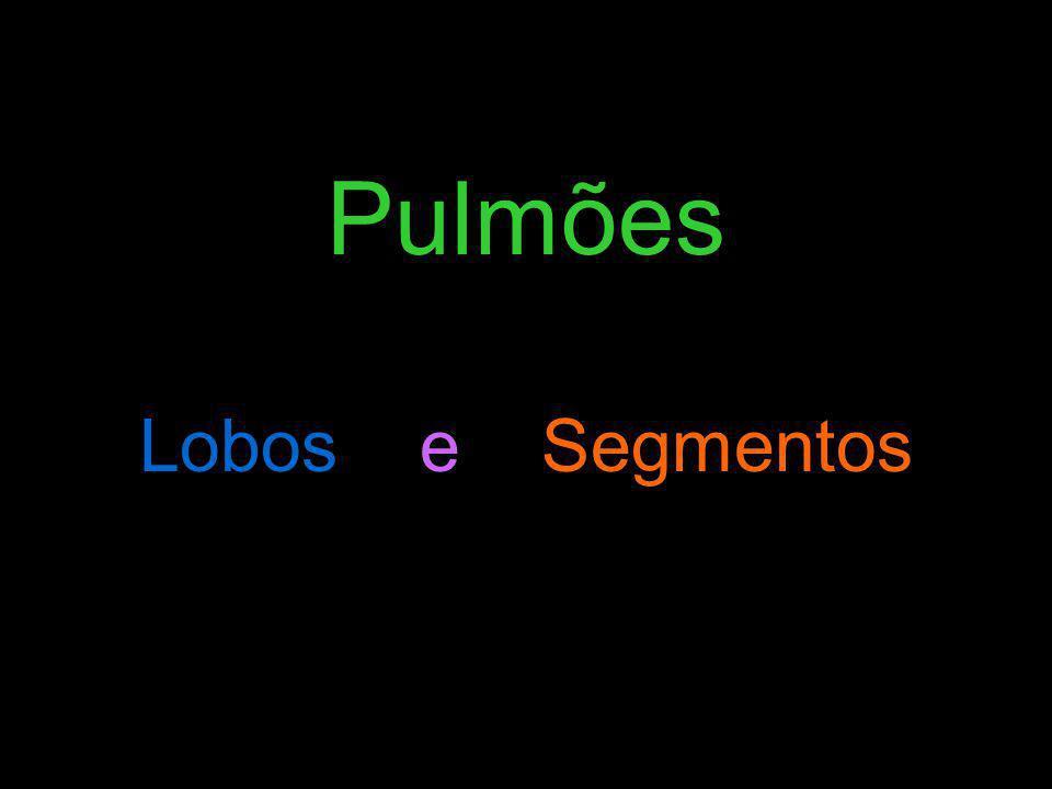 Pulmões Lobos e Segmentos
