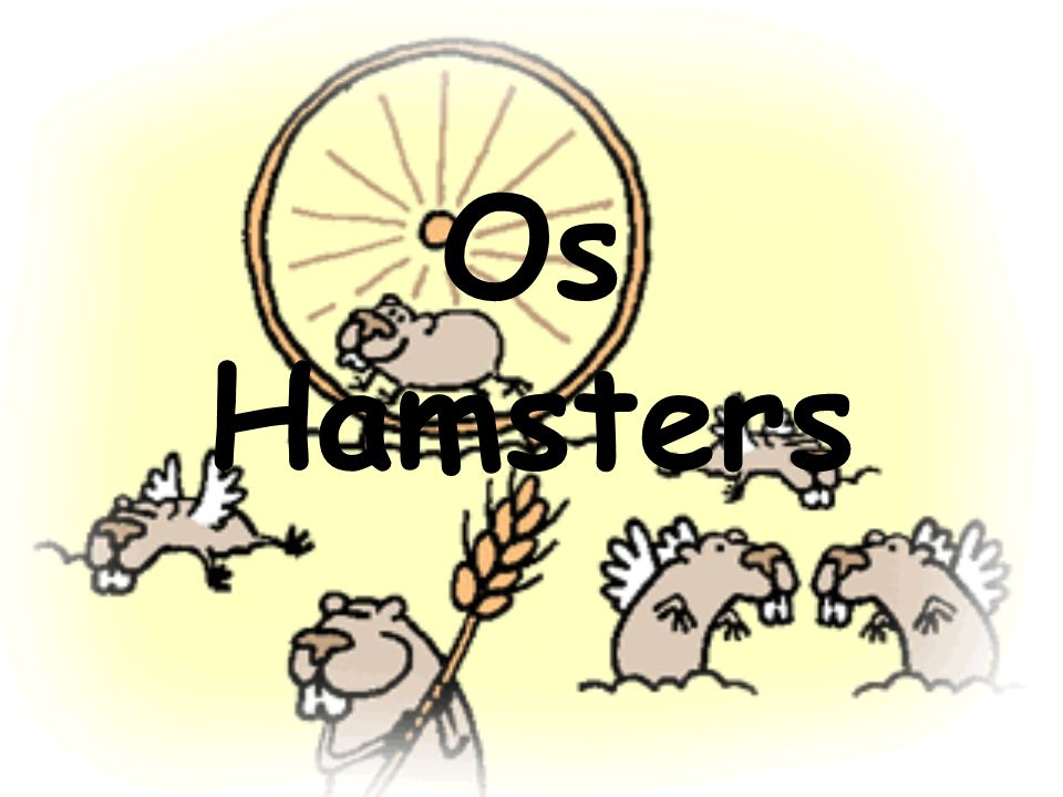 Os Hamsters
