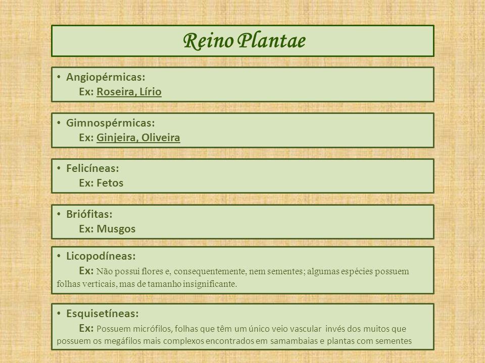 Reino Plantae Angiopérmicas: Ex: Roseira, Lírio Gimnospérmicas: