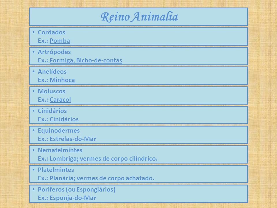 Reino Animalia Cordados Ex.: Pomba Artrópodes