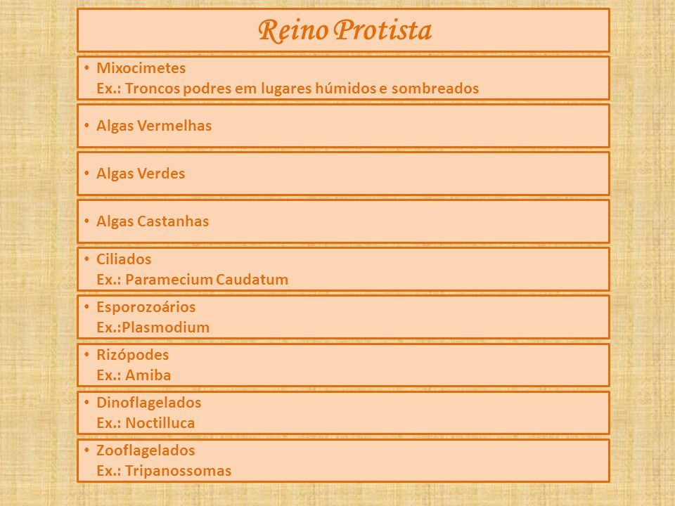 Reino Protista Mixocimetes