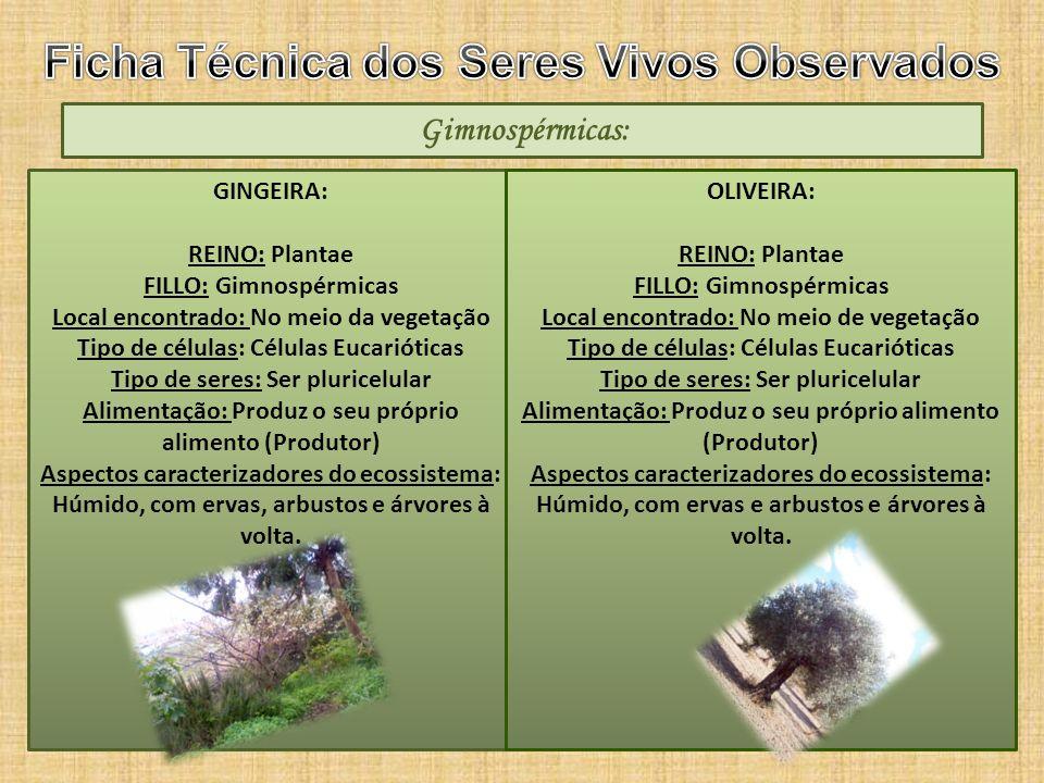 Ficha Técnica dos Seres Vivos Observados