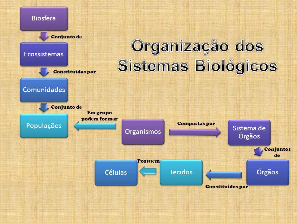 Organização dos Sistemas Biológicos