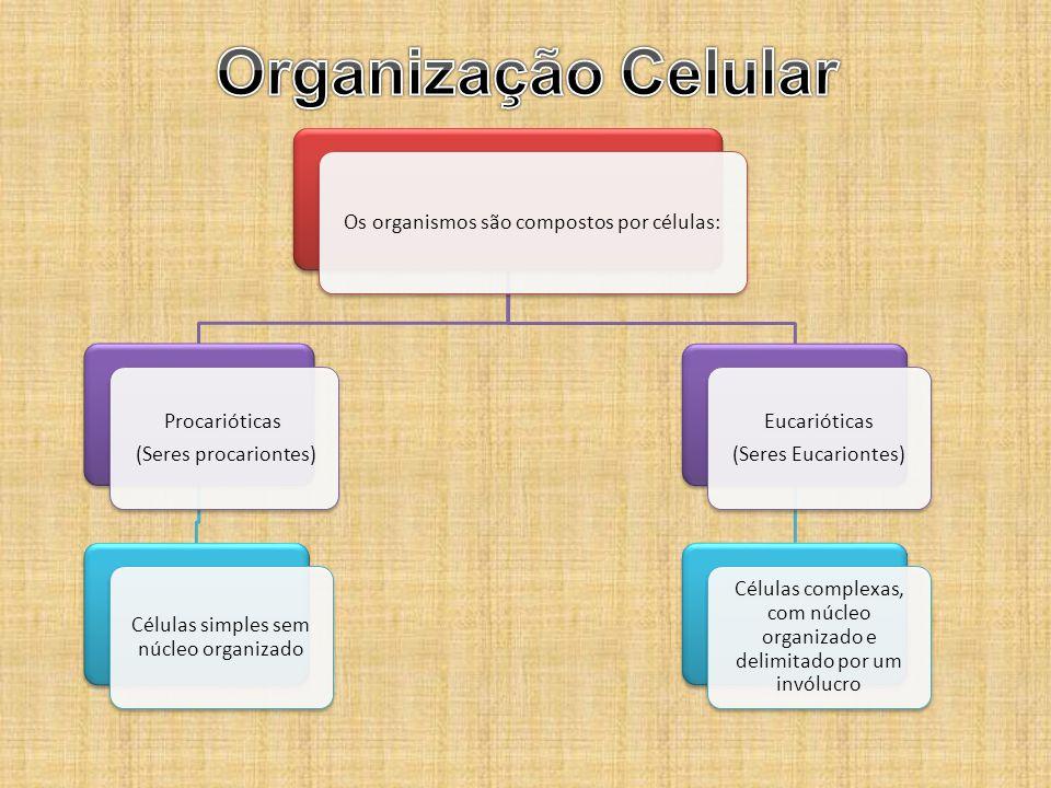 Organização Celular Os organismos são compostos por células:
