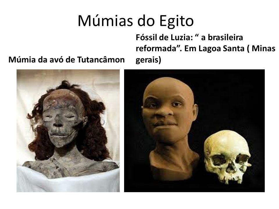 Múmias do Egito Fóssil de Luzia: a brasileira reformada .