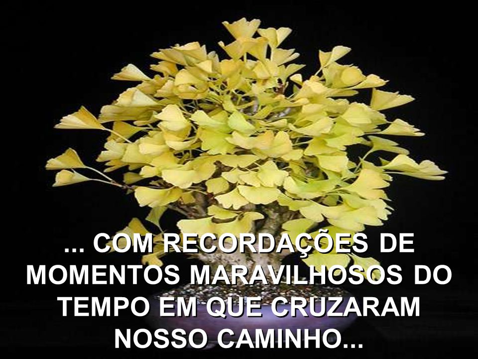 ... COM RECORDAÇÕES DE MOMENTOS MARAVILHOSOS DO TEMPO EM QUE CRUZARAM NOSSO CAMINHO...