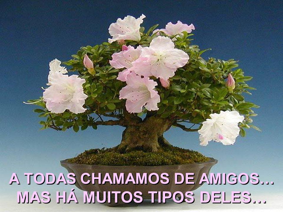 A TODAS CHAMAMOS DE AMIGOS… MAS HÁ MUITOS TIPOS DELES…