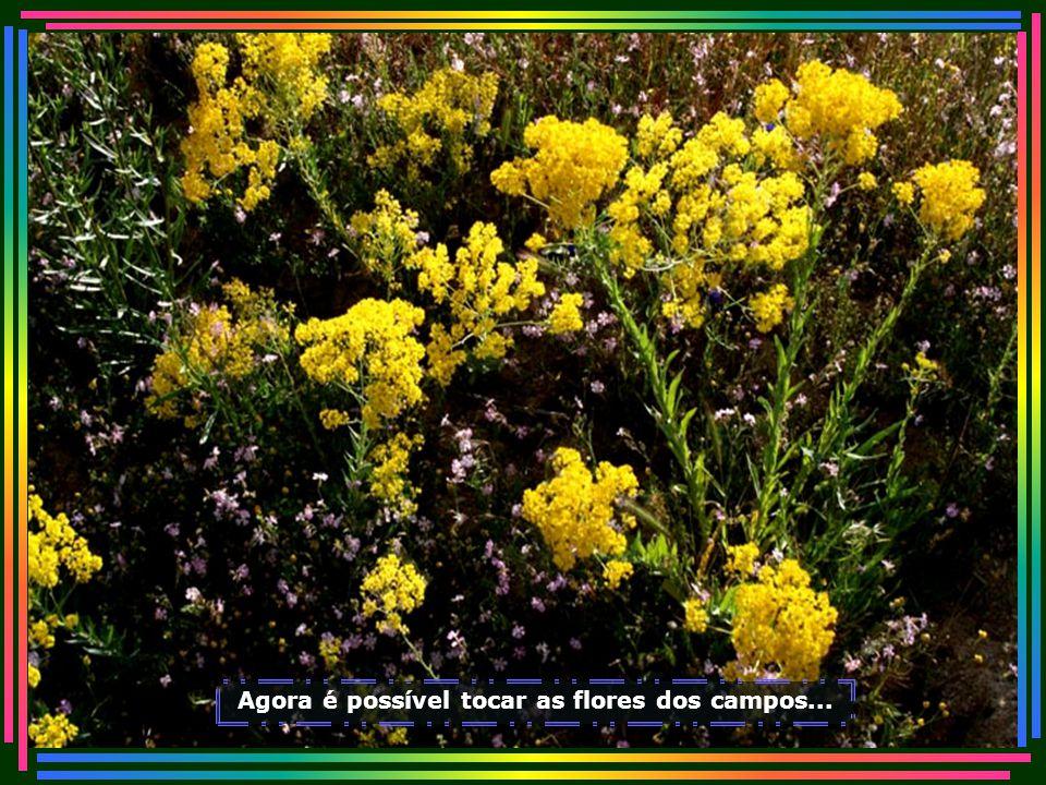 Agora é possível tocar as flores dos campos...