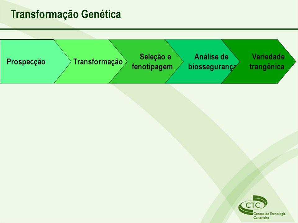 Transformação Genética