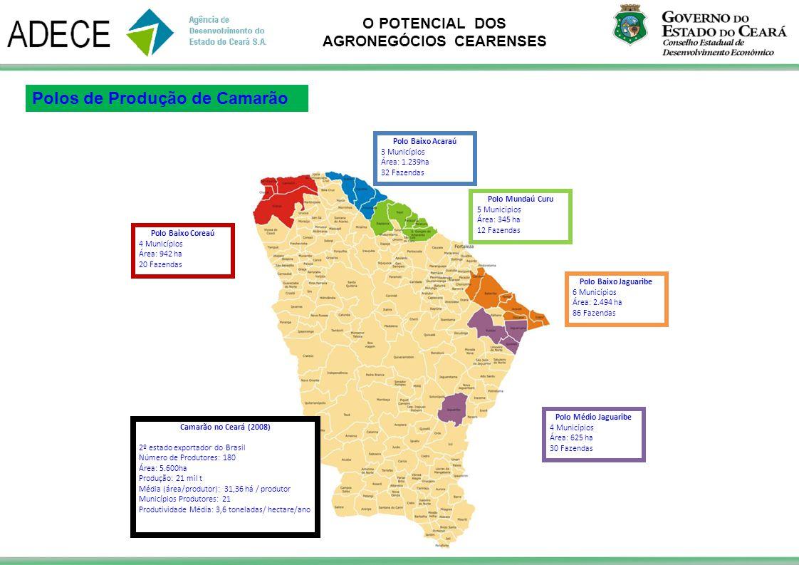 Polos de Produção de Camarão