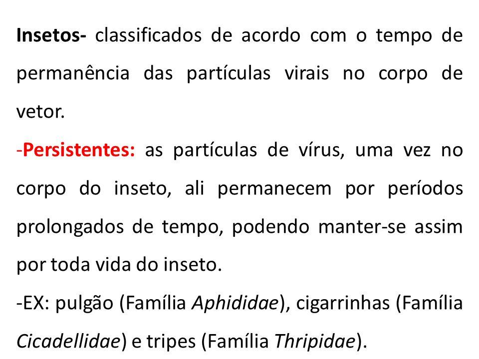 Insetos- classificados de acordo com o tempo de permanência das partículas virais no corpo de vetor.