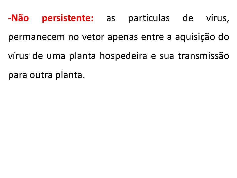 Não persistente: as partículas de vírus, permanecem no vetor apenas entre a aquisição do vírus de uma planta hospedeira e sua transmissão para outra planta.