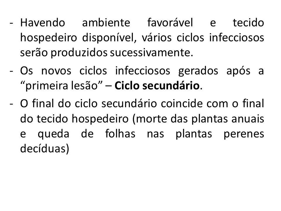 Havendo ambiente favorável e tecido hospedeiro disponível, vários ciclos infecciosos serão produzidos sucessivamente.