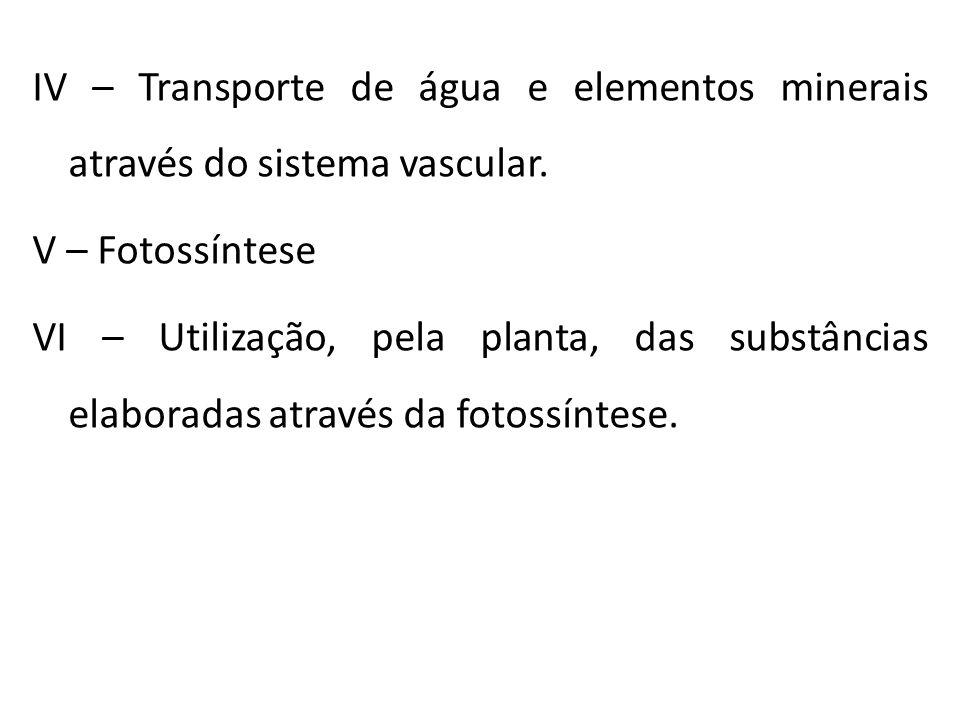 IV – Transporte de água e elementos minerais através do sistema vascular.