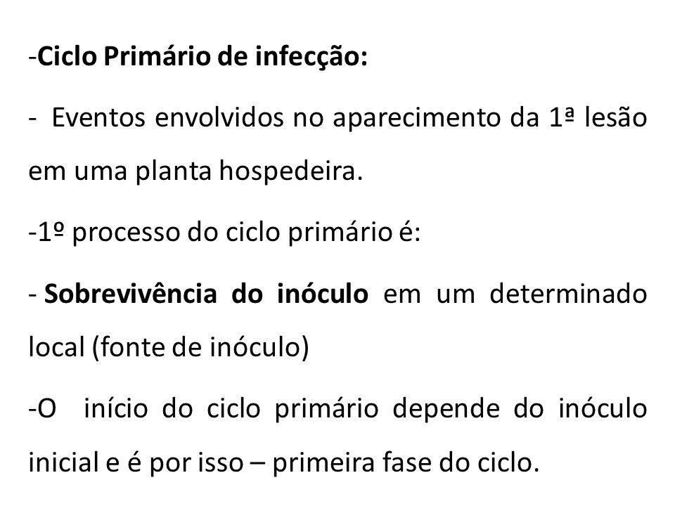 Ciclo Primário de infecção: