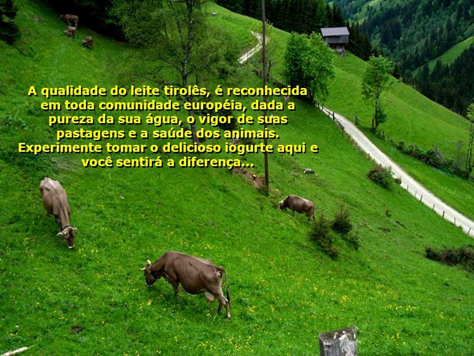 A qualidade do leite tirolês, é reconhecida em toda comunidade européia, dada a pureza da sua água, o vigor de suas pastagens e a saúde dos animais.