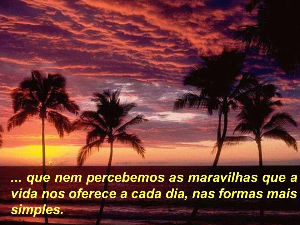 ... que nem percebemos as maravilhas que a vida nos oferece a cada dia, nas formas mais simples.