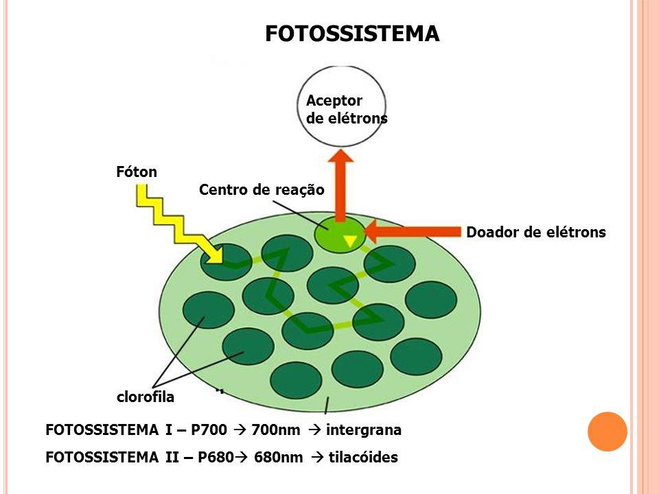 FOTOSSISTEMA Aceptor de elétrons Fóton Centro de reação