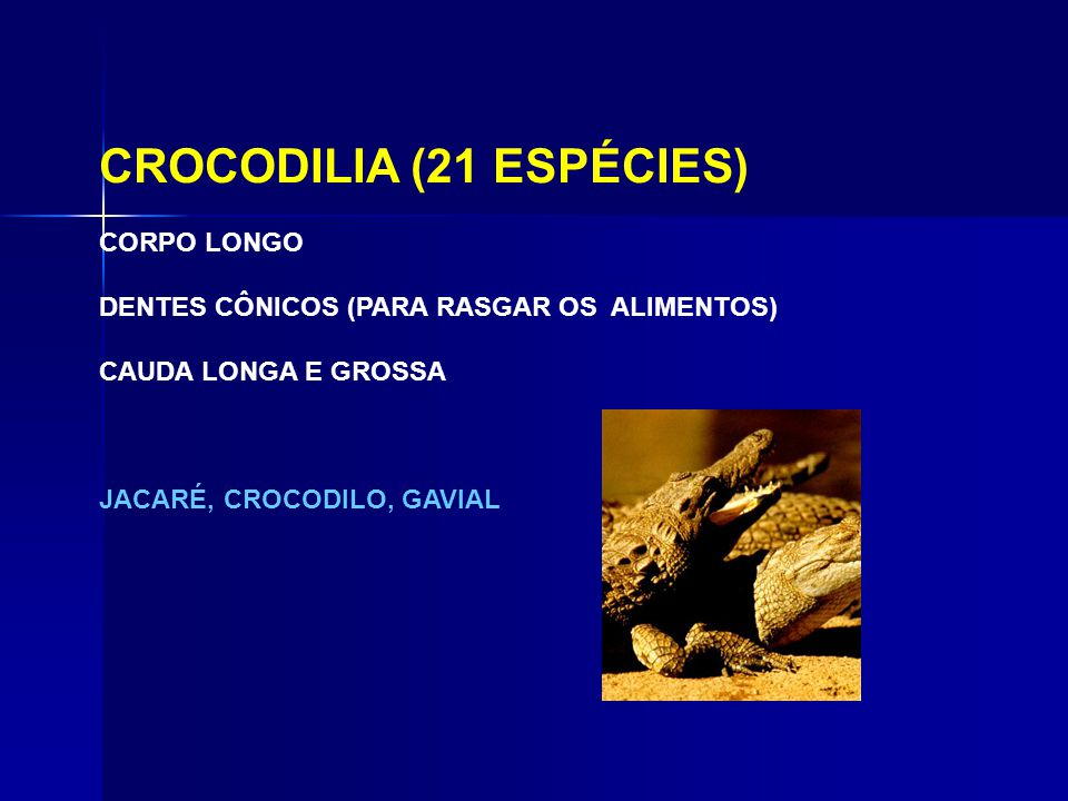 CROCODILIA (21 ESPÉCIES)