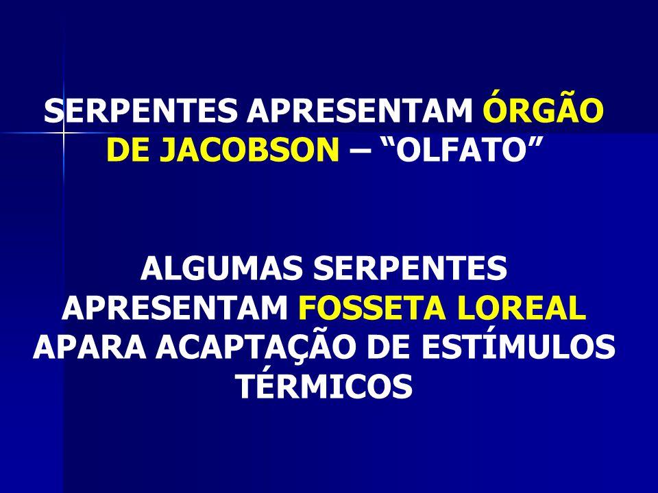 SERPENTES APRESENTAM ÓRGÃO DE JACOBSON – OLFATO
