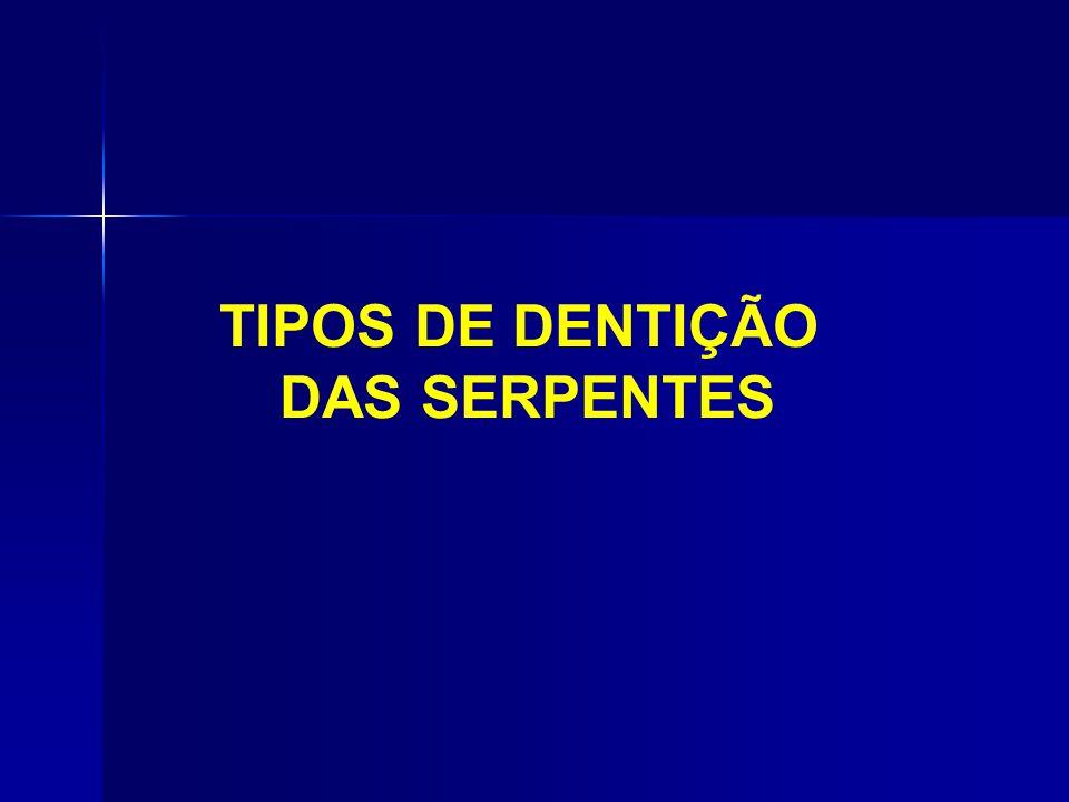 TIPOS DE DENTIÇÃO DAS SERPENTES