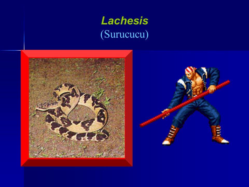 Lachesis (Surucucu)